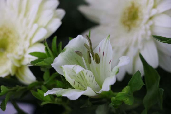 متن در وصف گل
